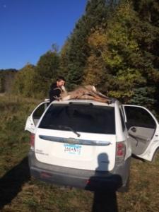 jays deer